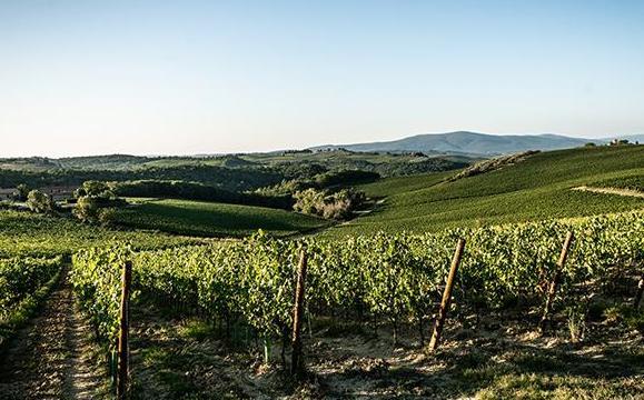 Cecchi cresce con i vini di Villa Rosa